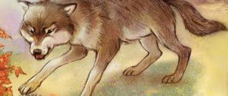 Волки и река