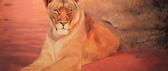 Вол и львица