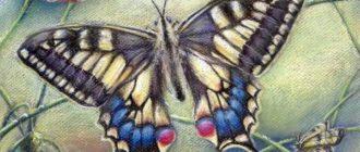 Гадальщица Бабочка