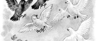 Галка и голуби