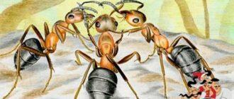 Анекдоты о муравьях-Одоевский В. Ф.
