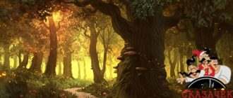 Гимн деревьям-Авторские