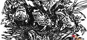 Голубые лягушки-Бианки В. В.