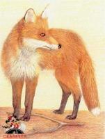 Коварный лис-