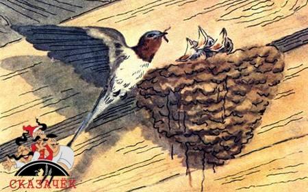 Ласточка и птицы