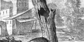 Орел, дикая свинья и кошка-Жан де Лафонтен