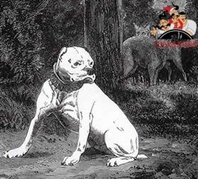Собака с обрезанными ушами