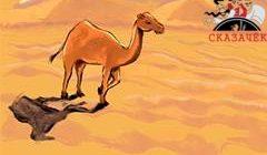 Верблюд-Стихи