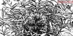 Заботливый цветок-Паустовский К. Г.