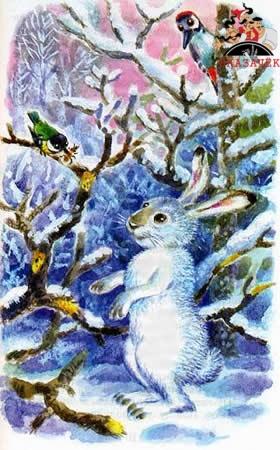 Заяц, косач, медведь и весна рассказ