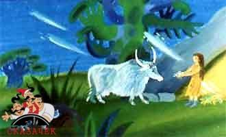 женщина и дикая корова