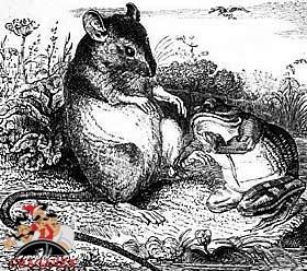 Лягушка и крыса