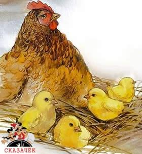 Маленький цыплёнок на большой земле