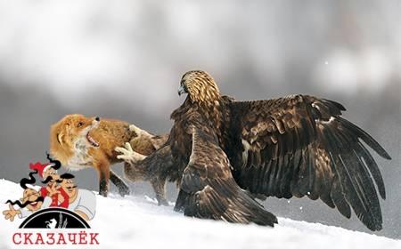 Орел и лисица