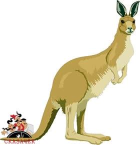 Приключение старого кенгуру