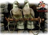 голуби на привязи