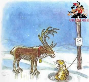 Телефон олень и тюлень север полюс